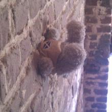 Teddy in the wall