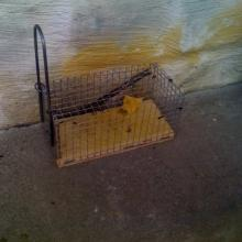 Friendly mouse trap